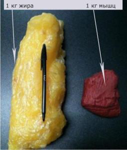 Жировая масса и мышцы