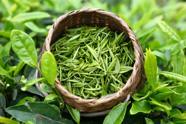 CHem-polezen-zelenyj-chaj-poleznye-svojstva-dlja-kletok-mozga-Чем-полезен-зеленый-чай-полезные-свойства-для-клеток-мозга